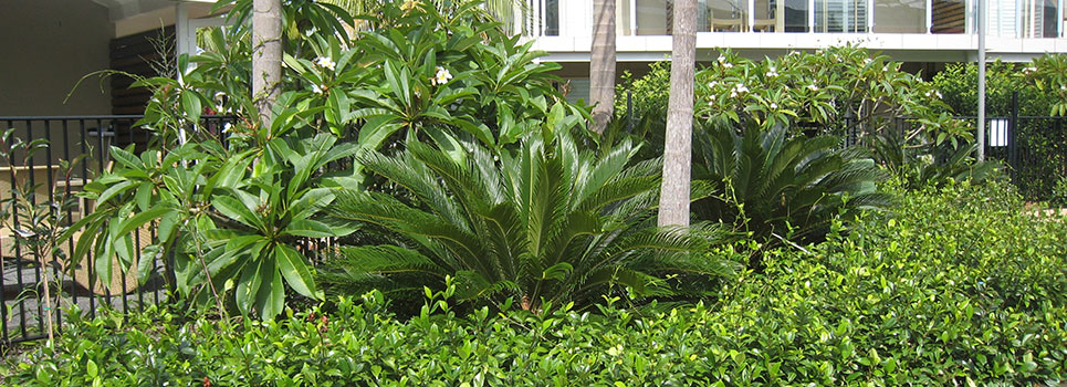 Plants 38