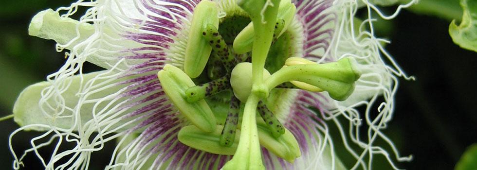 Kwikfynd Plants 4