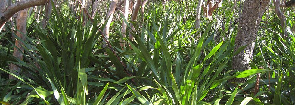 Kwikfynd Plants 40