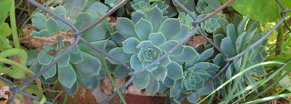 Kwikfynd Plants 43