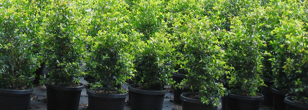 Kwikfynd Plants 5