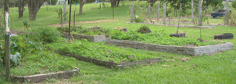 Kwikfynd Plants 50