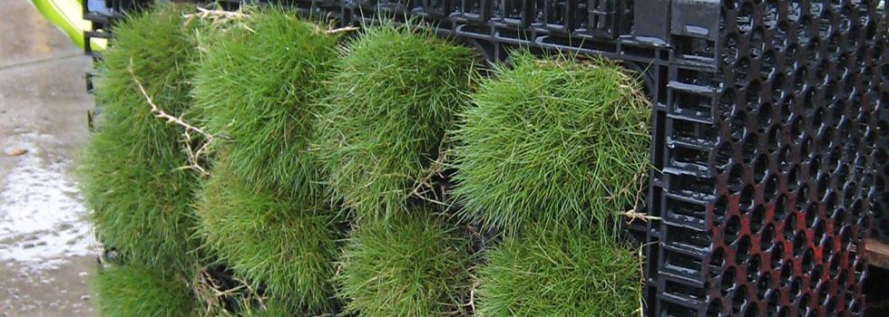 Kwikfynd Plants 53