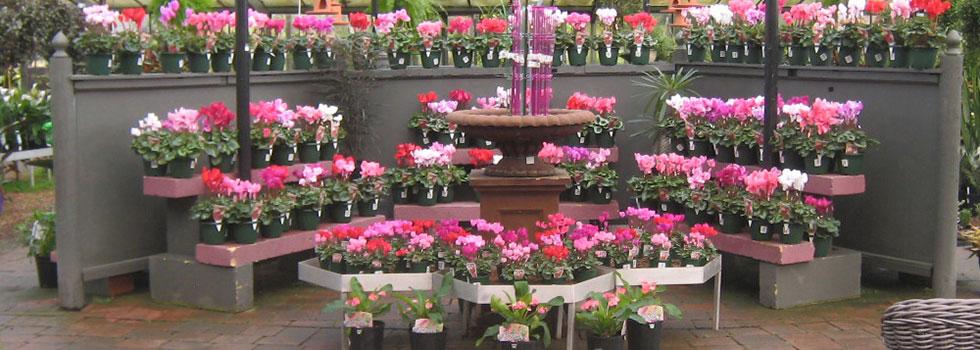 Kwikfynd Plants 55