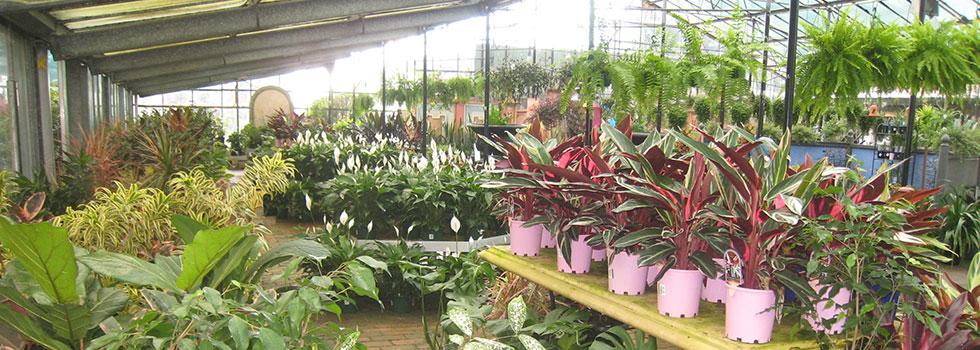 Kwikfynd Plants 58