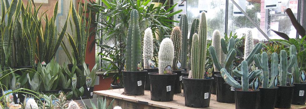 Plants 60