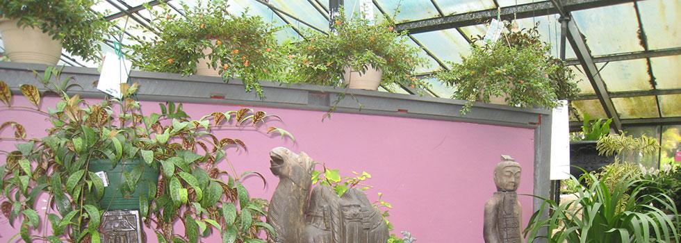 Kwikfynd Plants 61