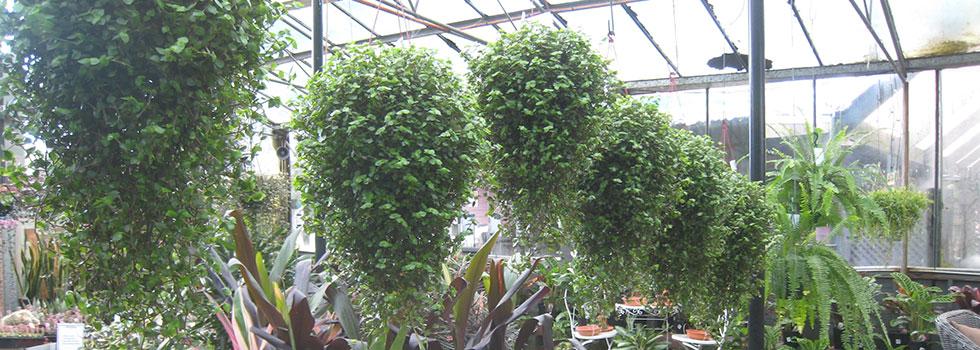 Kwikfynd Plants 62