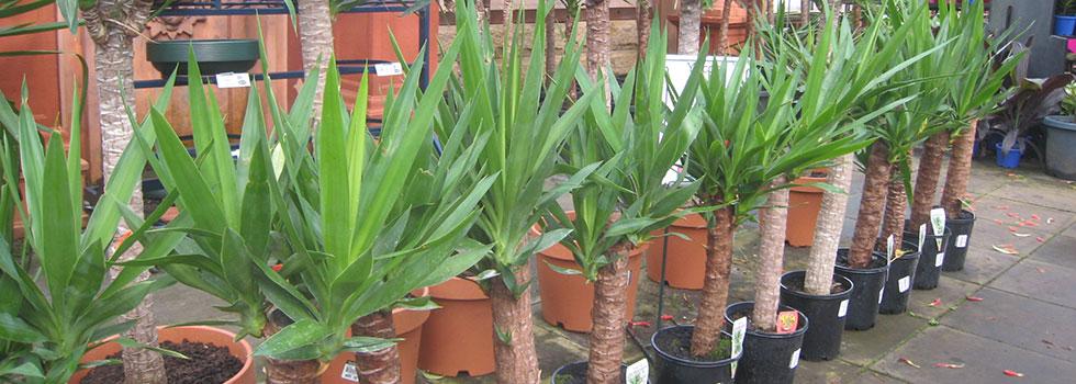 Kwikfynd Plants 64