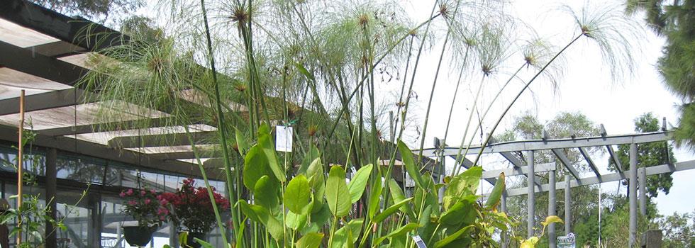 Kwikfynd Plants 65