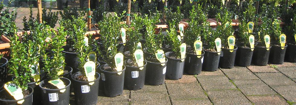 Kwikfynd Plants 66