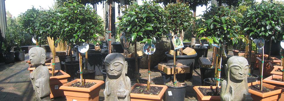 Kwikfynd Plants 67