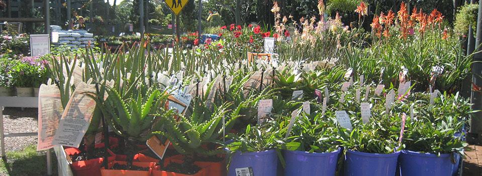 Kwikfynd Plants 69
