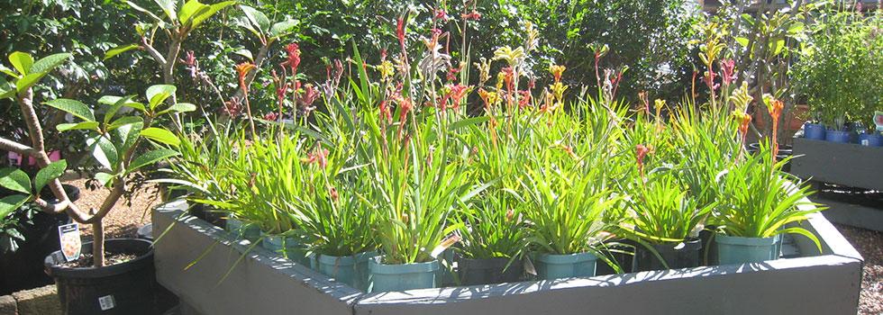 Kwikfynd Plants 71