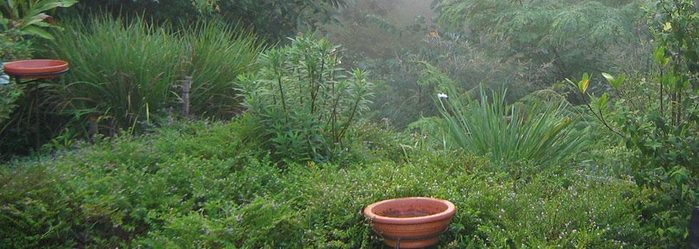 Kwikfynd Plants 73