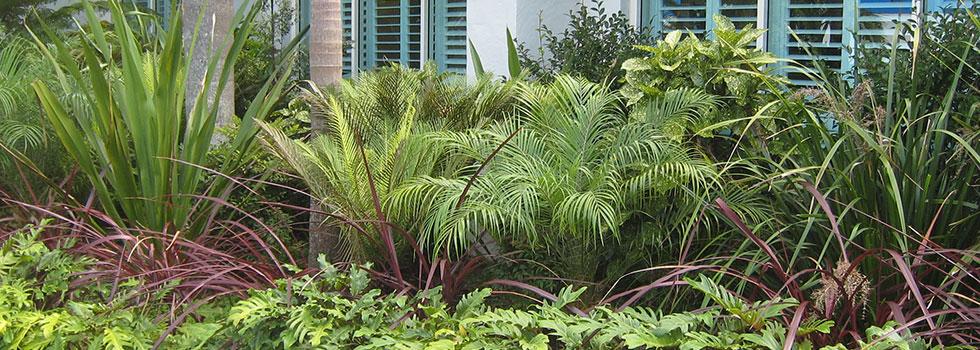 Kwikfynd Plants 74