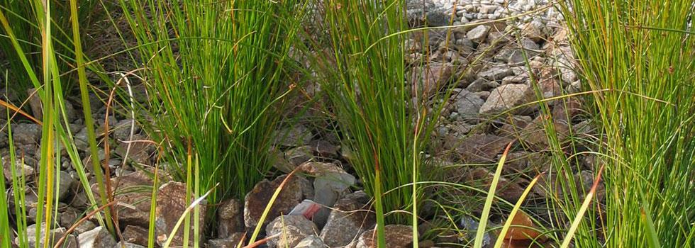 Kwikfynd Plants 75