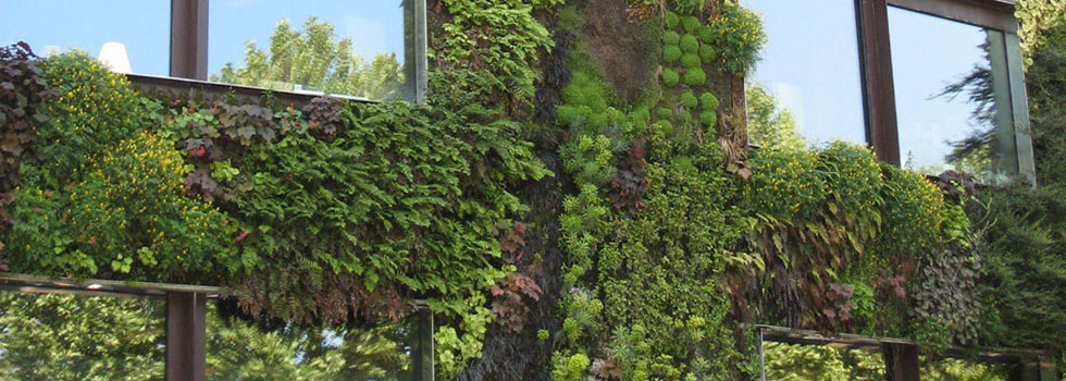 Residential Landscaping Plants : Plants residential commercial specialists kwikfynd