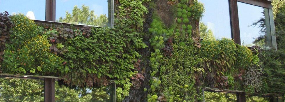 Kwikfynd Plants 78