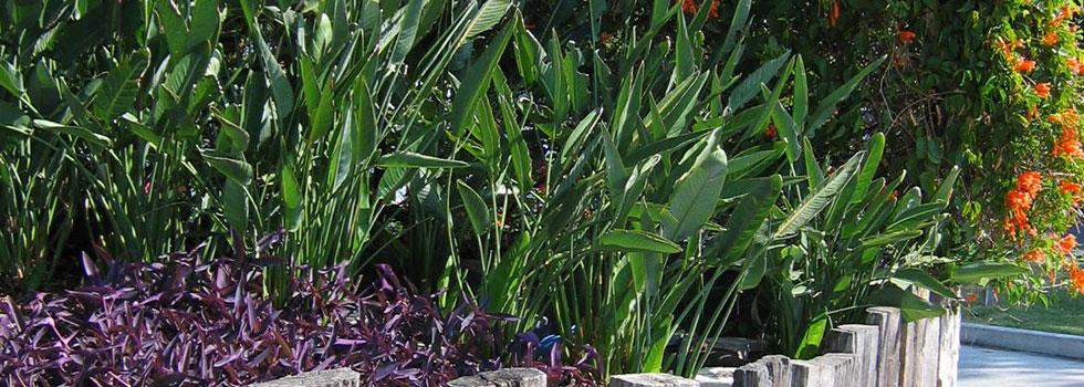 Kwikfynd Plants 79