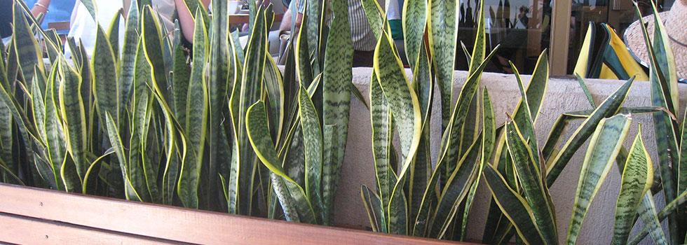 Kwikfynd Plants 8
