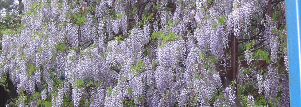 Kwikfynd Plants 80
