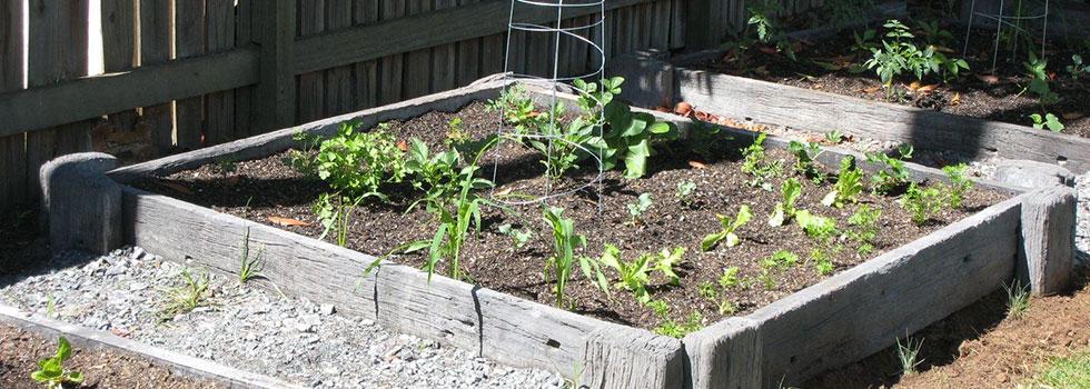 Kwikfynd Plants 82