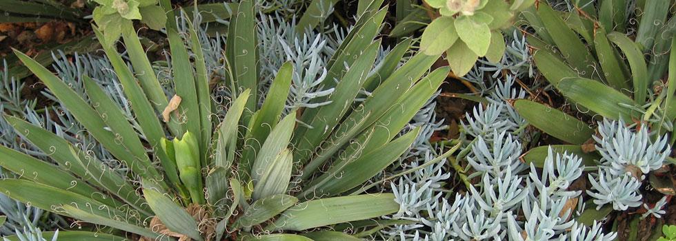 Kwikfynd Plants 83