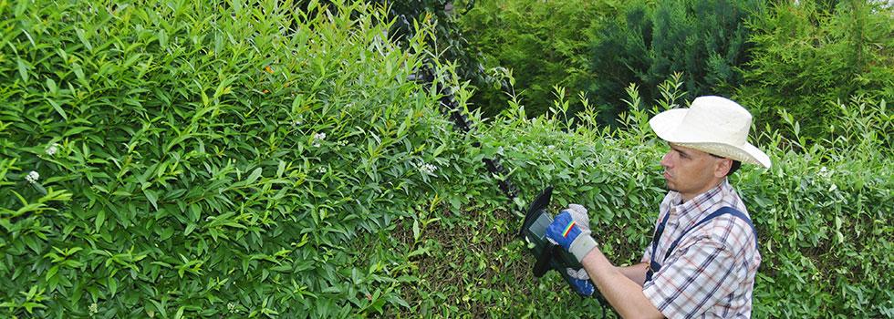 Kwikfynd Plants 86