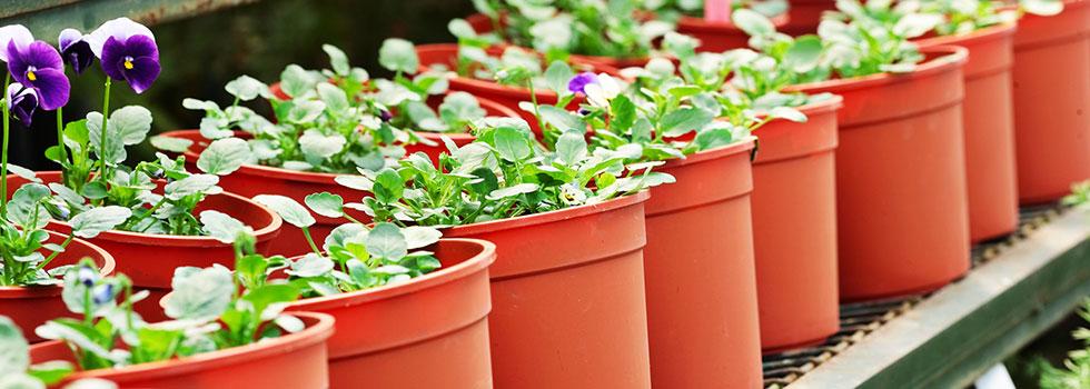 Kwikfynd Plants 94