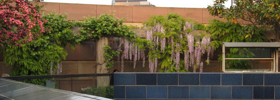Rooftop and balcony gardens 1