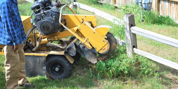 Stump grinding services 3