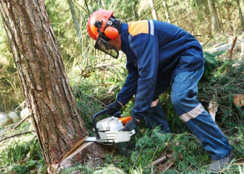 Tree felling services 21