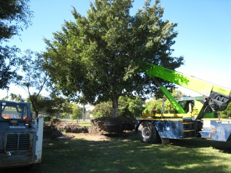 Tree management services 4