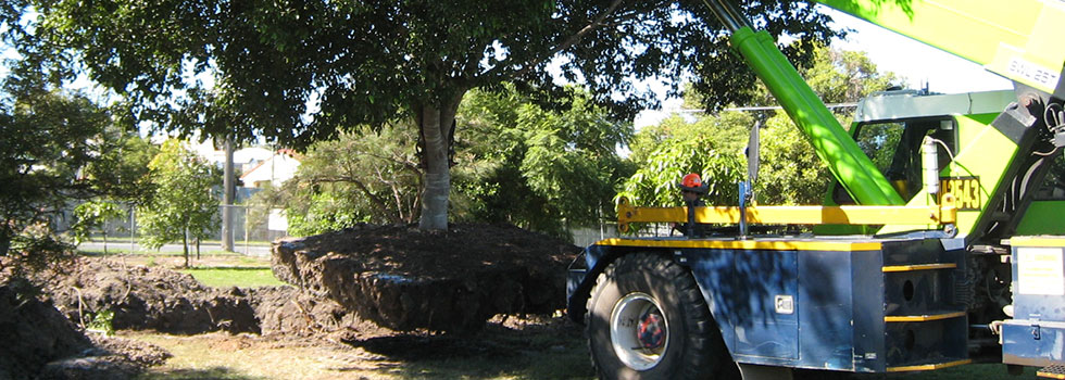 Kwikfynd Tree transplanting 5