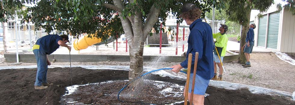 Kwikfynd Tree transplanting 6