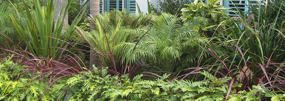 Kwikfynd Tropical landscaping 2