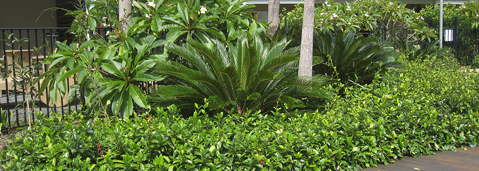 Residential Landscaping Plants : Tropical landscaping residential commercial