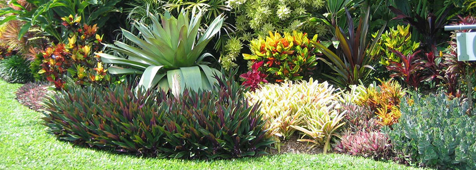Tropical landscaping residential commercial tropical for Tropical landscape