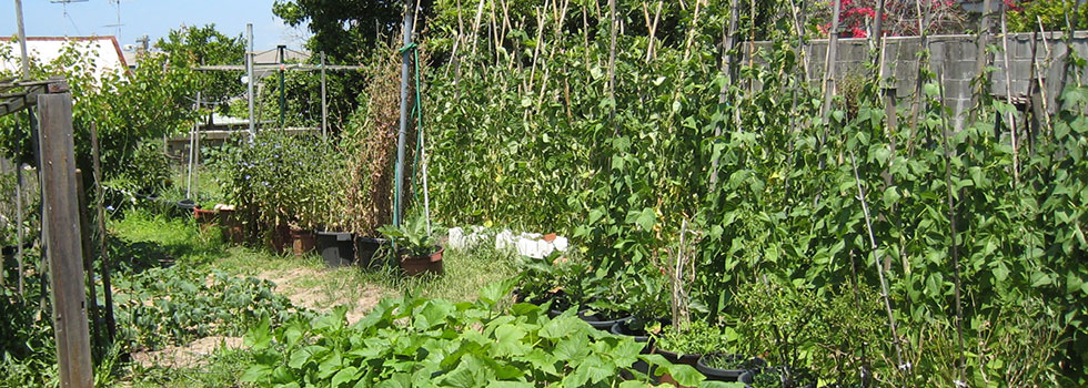 Kwikfynd Vegetable gardens 6