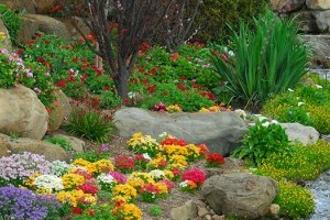 Commercial Landscaping gallery image