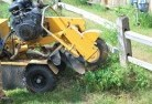 Stump grinding services 3 thumb