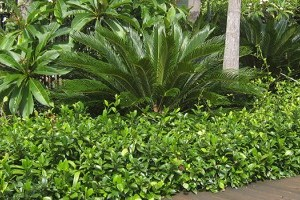Hard Landscaping Surfaces gallery image