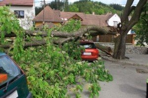 Tree Cutting Services thumb