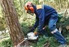 Tree felling services 21 thumb