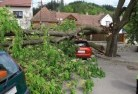 Tree felling services 41 thumb