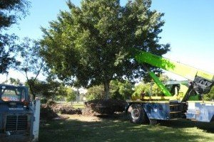 Tree Management Services thumb